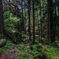 В сказочном тебердинском лесу :: Сергей