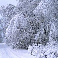Наша зима :: Николай Белавин
