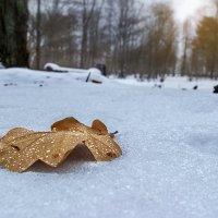 ... Winter :: Виталий Pozitiff