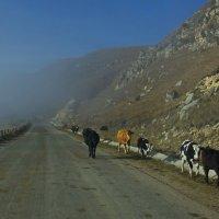 Туман на дороге. :: Ирина Нафаня