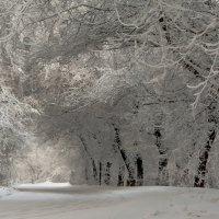Снежная арка :: Сергей Герасимов