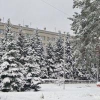 Зима,зима... :: Лидия (naum.lidiya)