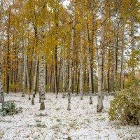 Пеовый снег :: Аркадий Беляков