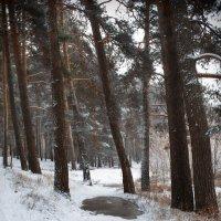 Лесная дорога :: Валерий Голоха