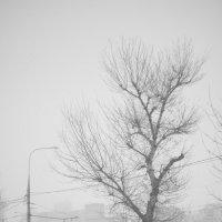 Москва, Бережковская набережная. Снегопад. :: Игорь Герман