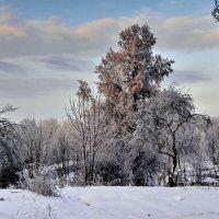Зима в Стрельне. :: Владимир Ильич Батарин