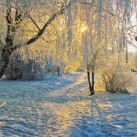 зима..утро..иней... :: юрий иванов