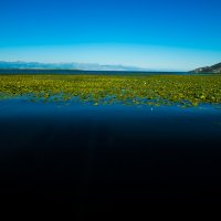 Скадарское озеро,Черногория :: Олег Семенов