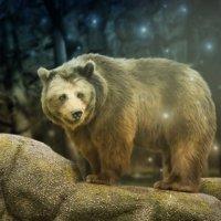 Медведь :: Amedeya Ay