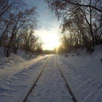 В лес :: Алексей Кривых