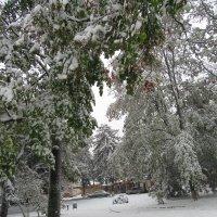 Три месяца зима. :: Вячеслав Медведев