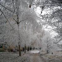 Донецк в снегу. :: Оля Богданович