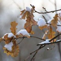 Деревья одели зимние шапки. :: Paparazzi