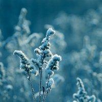 Букет зимы :: Виталий Латышонок