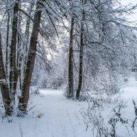 Снежный ноябрь :: Аркадий Беляков