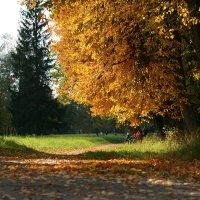 осень :: Владимир Д