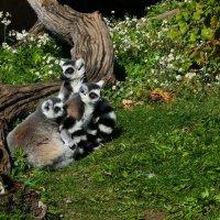 На островке увидели вот таких зверюшек! :: Юрий Поляков