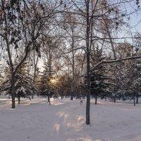 В городском парке :: cfysx