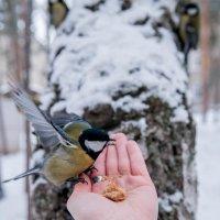 Смелый птиц) :: Алена Демченко