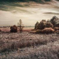 Ожидание зимы :: Ирина Falcone