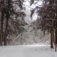 Зима в лесу :: Андрей .