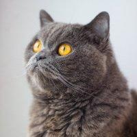Мой кот Том :: Юлия Доронина