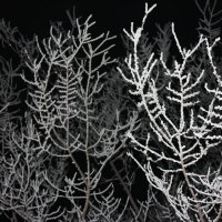 зима ночью :: Наташа Пасакас