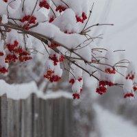 Декабрь. Куст калины у дороги. :: Елена Ахромеева