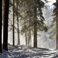 Солнце и снег. :: Наталья