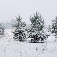 В снежном вальсе :: Павлова Татьяна Павлова