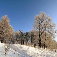 Красивая зима! :: Вера Щукина
