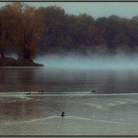 Раннее утро в Нагатинской пойме :: Максим Кирютин