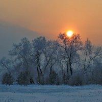 Уходит солнце на покой, слегка касаясь кончиков ветвей :: Екатерина Торганская