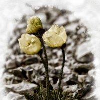 Цветы :: Alexander Dementev