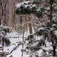 Зимний лес. :: ирм. Феодосий Олег Раздобреев