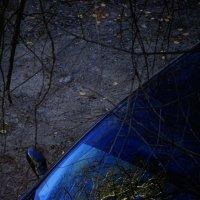 авто-лес4 :: Дмитрий Потапов