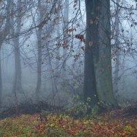 туман в лесу :: Olena