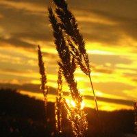 золотое небо :: Natalia
