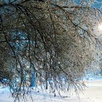 Ледяная краса :: Михаил Сазонов