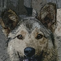 Волчишка :: Юлия Денискина