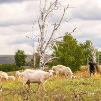 Любопытная коза :: Любовь Потеряхина