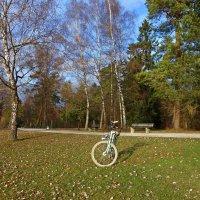 Декабрь уж на дворе... :: Galina Dzubina