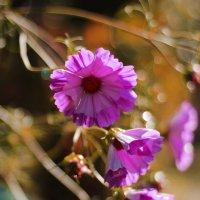 Цветок :: Татьяна Тимофеева