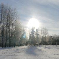 Зимний лес :: Дмитрий Гринкевич