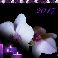 Орхидеи к Новому году :: Nina Yudicheva