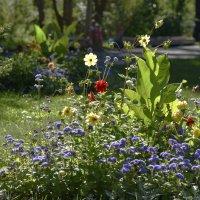 Городские цветы :: юрий Амосов