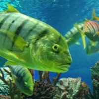 Рыба в полосочку :: Владимир Гилясев