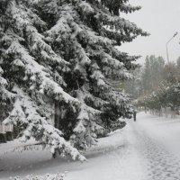 Лес в городе. Зима. :: Вячеслав Медведев