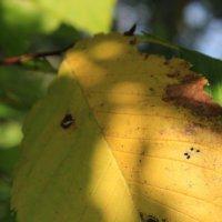 Осень золотая :: Анна Шишалова