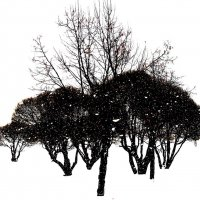 Зимняя графика :: Tanja Gerster